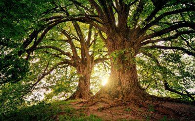 През май 2018г. – европари за проекти на кандидати в сектор лесовъдство и дървопреработка.